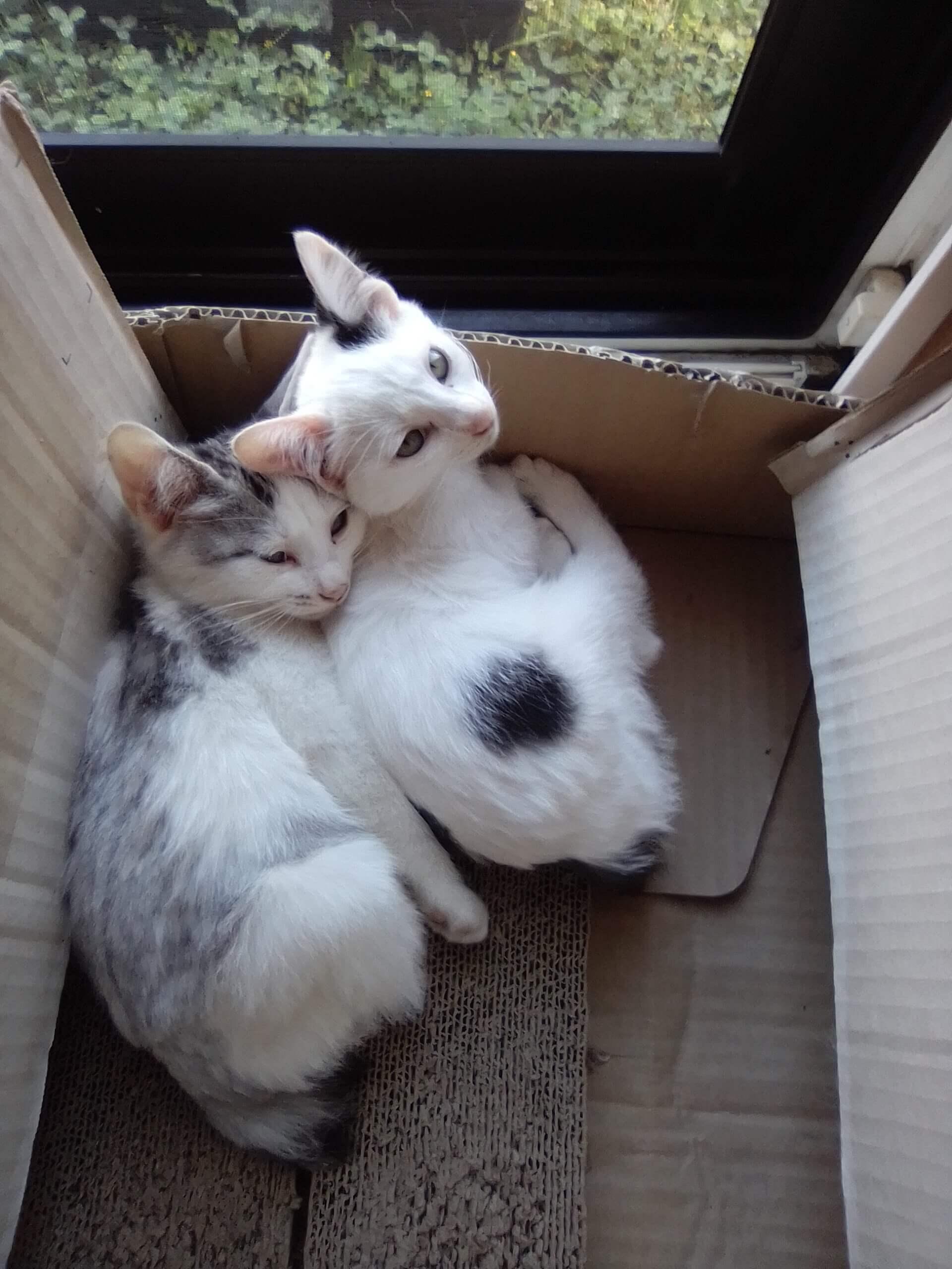 青森県の野良さんの兄妹マルとフク