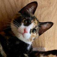 生後4ヶ月の子猫2