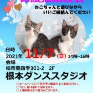 11/7(日)根本ダンススタジオ保護猫譲渡会