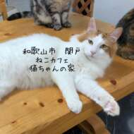 ねこカフェ猫ちゃんの家