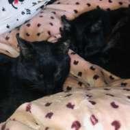 黒猫アイス