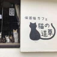 保護猫カフェ猫の道草